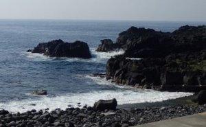 5/27(月)海洋公園は通常オープンです