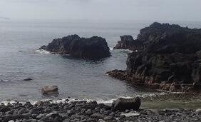 5/31(金)とても穏やかな海洋公園