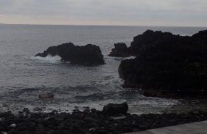 6/12(水)水がきれいになった海洋公園