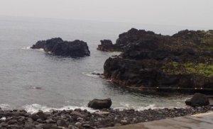 7/13(土)伊豆海洋公園は穏やかです
