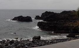 10/29(火)穏やかな海洋公園