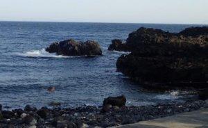 3/21(土)伊豆海洋公園はダイバーで賑わっていました