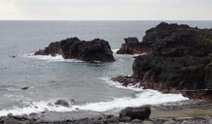 7/16(木)今日も穏やかな海洋公園