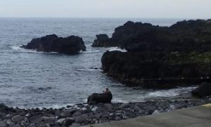 7/22(水)今日も穏やかな海洋公園