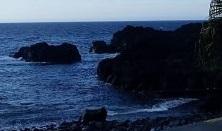 5/18(火)今日も海洋公園でファンダイビング