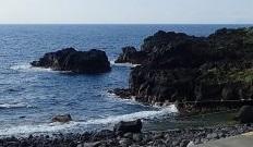 5/23(日)伊豆海洋公園でファンダイビング