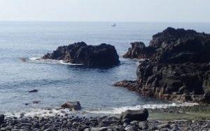 6/9(水)今日も穏やかな海洋公園