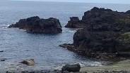 6/25(金)今日も穏やかなコンディションの海洋公園