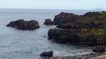 7/23(金・祝)今日も海洋公園は穏やかです