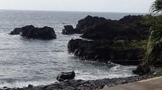 8/25(水)穏やかな伊豆海洋公園