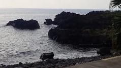 9/24(金)海洋公園でファンダイビング